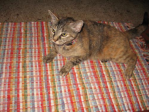 Cat on rug