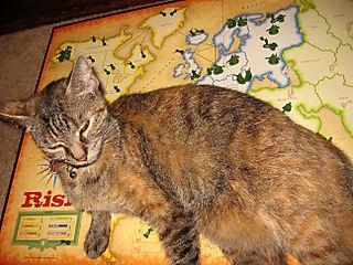 Board cat